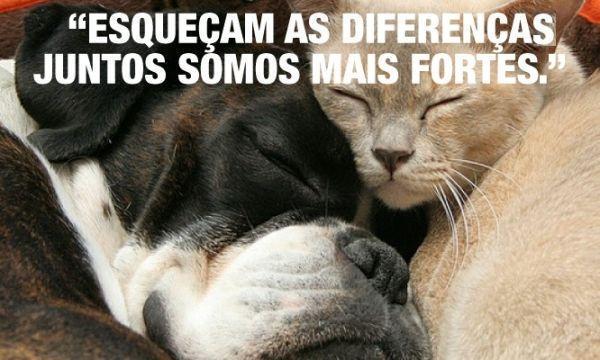 Esqueçam as diferenças