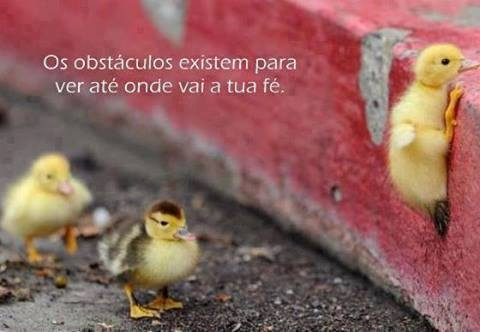 Os obstáculos