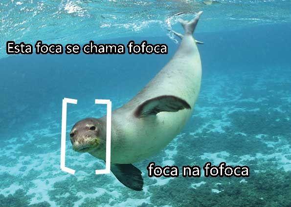 Esta foca se chama fofoca