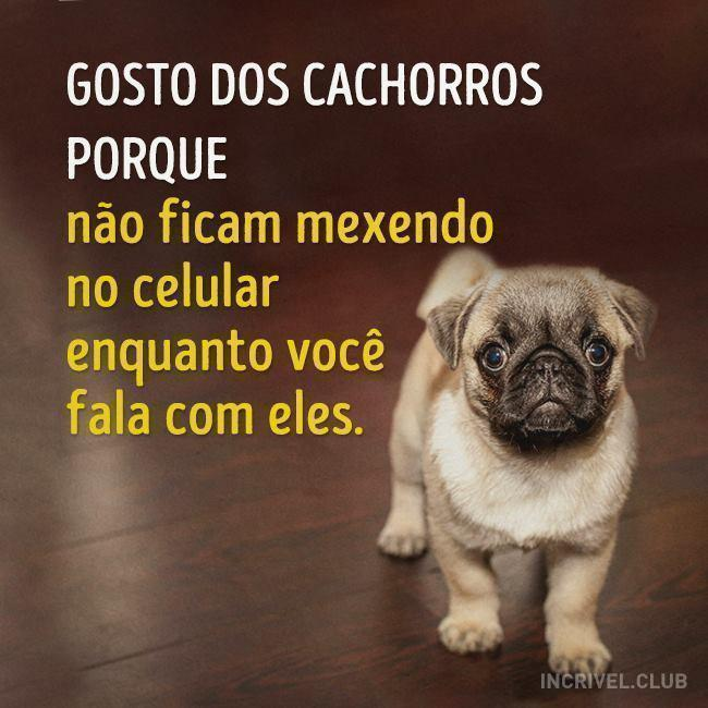 Conhecido Gosto dos cachorros - Frase para Facebook IP26